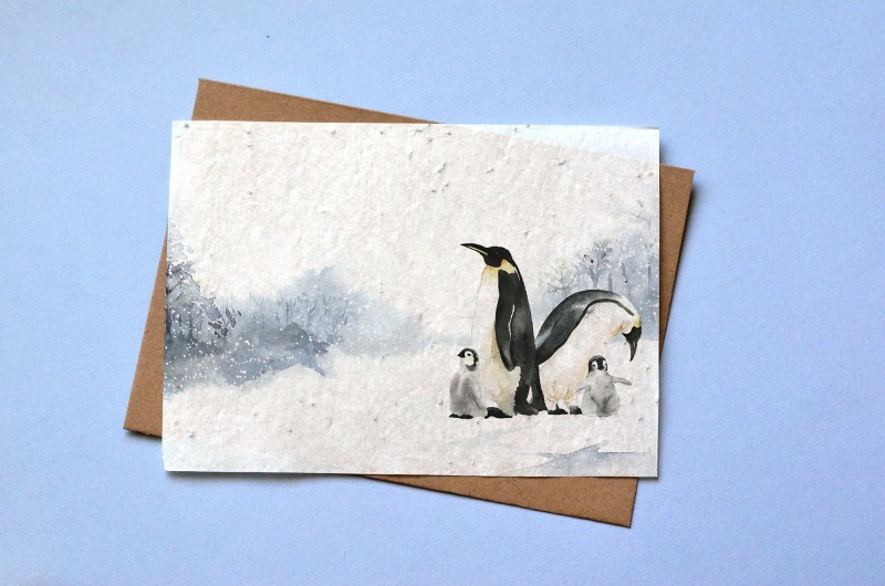 Carte à planter Pingouin